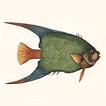 Рыбы Марка Кейтсби