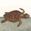 Черепахи и черепашки