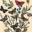 Фридрих Берге. Книга бабочек