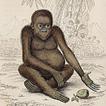 Вильям Жардин. Млекопитающие. Том II. 1833 год