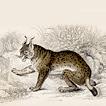 Вильям Жардин. Млекопитающие. Том III. 1834 год