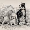 Домашние собаки полковника Смита