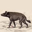 Вильям Жардин. Млекопитающие. Том V. 1840 год