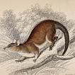 Вильям Жардин. Млекопитающие. Том VIII. 1841 год