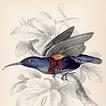 Колибри и нектарницы