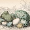 Яйца от разных авторов