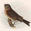 Певчие птицы Анны Пратт