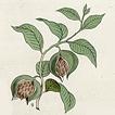 Разные растения